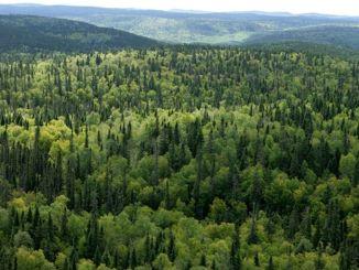 orman bilim kurulu ilk toplantisini yapti