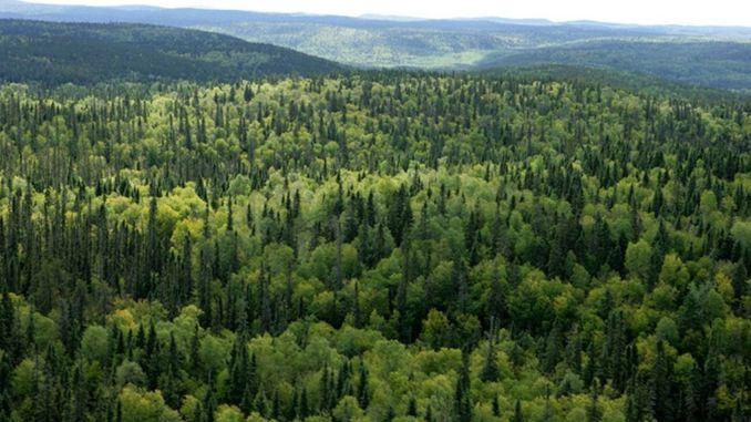 عقد مجلس علوم الغابات اجتماعه الأول