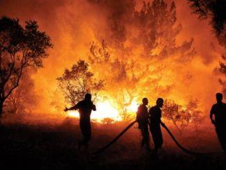 лісові пожежі та зміна клімату можуть спровокувати астму