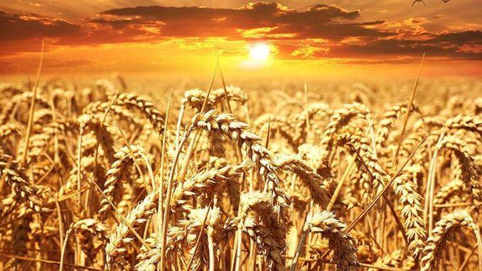 chp municipalities agricultural development summit begins