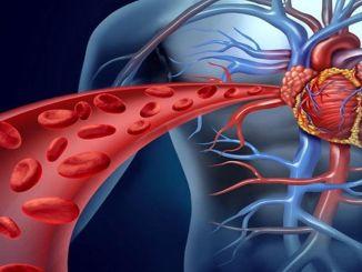 Priporočila za zaščito zdravja srca in ožilja