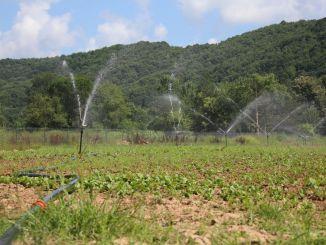 Con el sistema de riego cerrado, el rendimiento en el suelo aumenta.