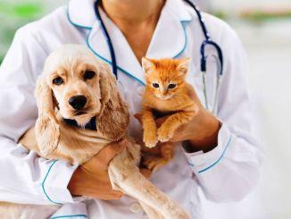 La esterilización protege a los perros y gatos machos de muchas enfermedades.