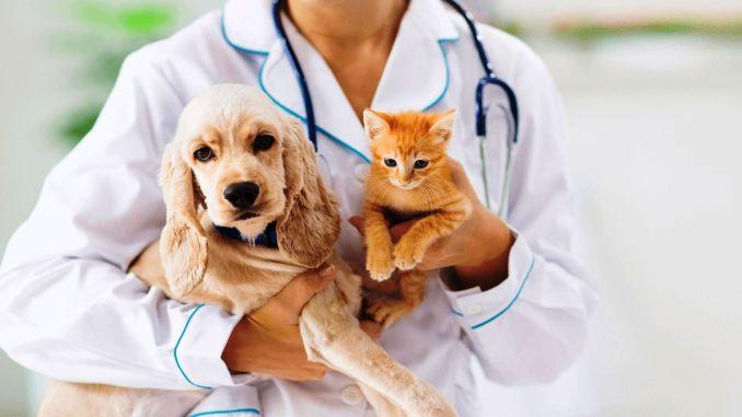 Стерилизация защищает котов и собак от многих болезней.