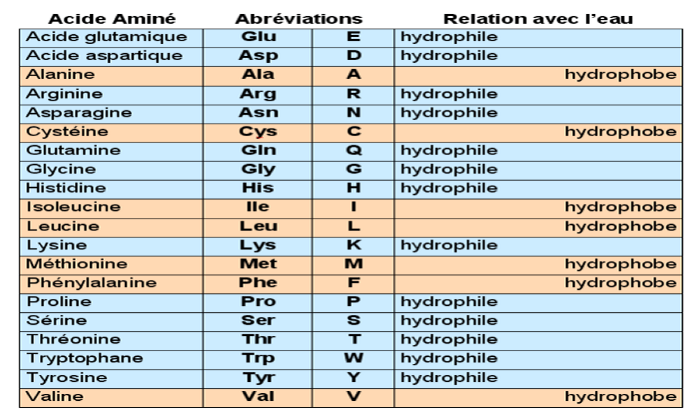 """Résultat de recherche d'images pour """"acides aminés hydrophobes"""""""