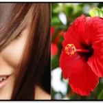Propiedades De La Flor De Jamaica Para El Cabello