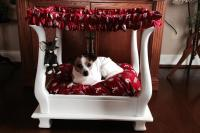 Coffee Table Dog Bed Furniture