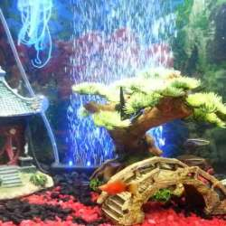 Authentic Asian Themed Fish Tank Decorations Ideas For Any Type Of Aquarium   Raysa House