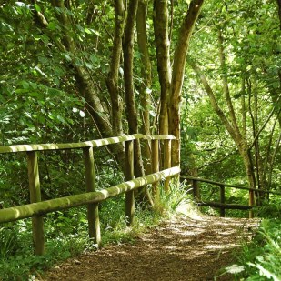 Explore our Ancient Woodlands