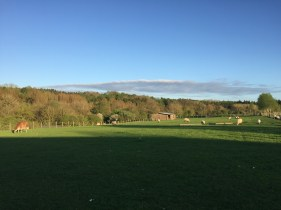 A lovely summer's evening at Rays Farm