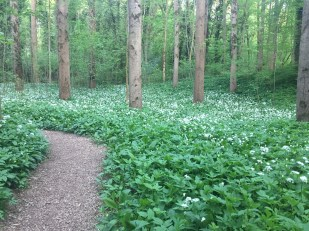 Come and take a stroll through our ancient Woodlands