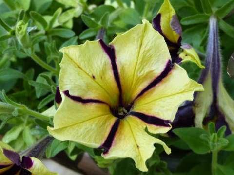 flower1_block1024