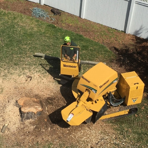 looking down on a stump grinder removing a tree stump