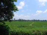 This is the scenery most of the time in Bali.