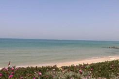 Jaffa Yafa Yafo Beach