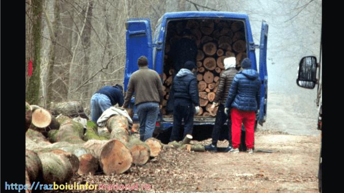 Pădurea Băneasa se taie copaci la greu