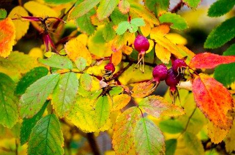 fall-colors-drive-2016-6529
