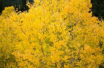 fall-colors-drive-2016-6579