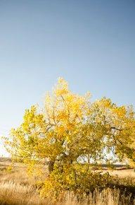 fall-photos-7023
