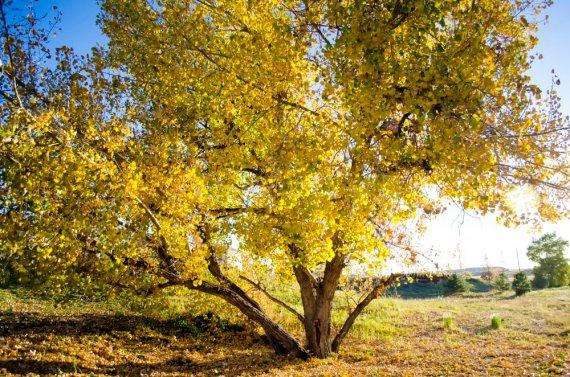 fall-photos-7030