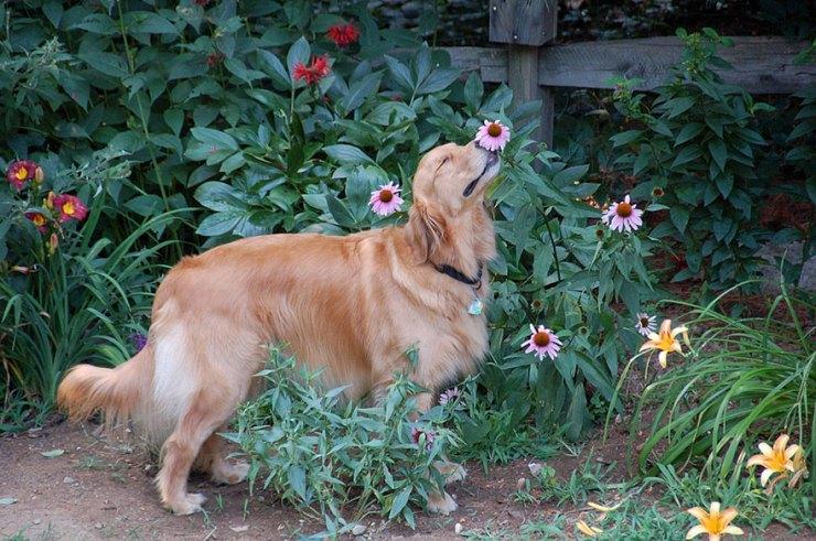 cachorro cheirando flores
