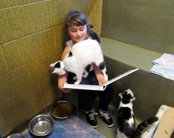 Para incentivar a leitura, abrigo lança programa em que crianças leem para confortar gatos resgatados 1