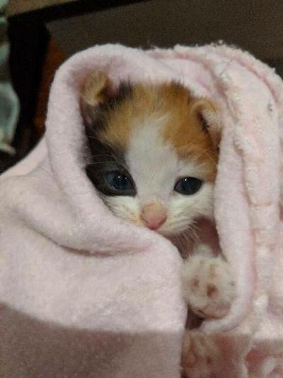gatinha desnutrida se recuperando