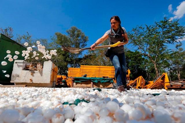 casca de ovo para despoluir rio mexicano