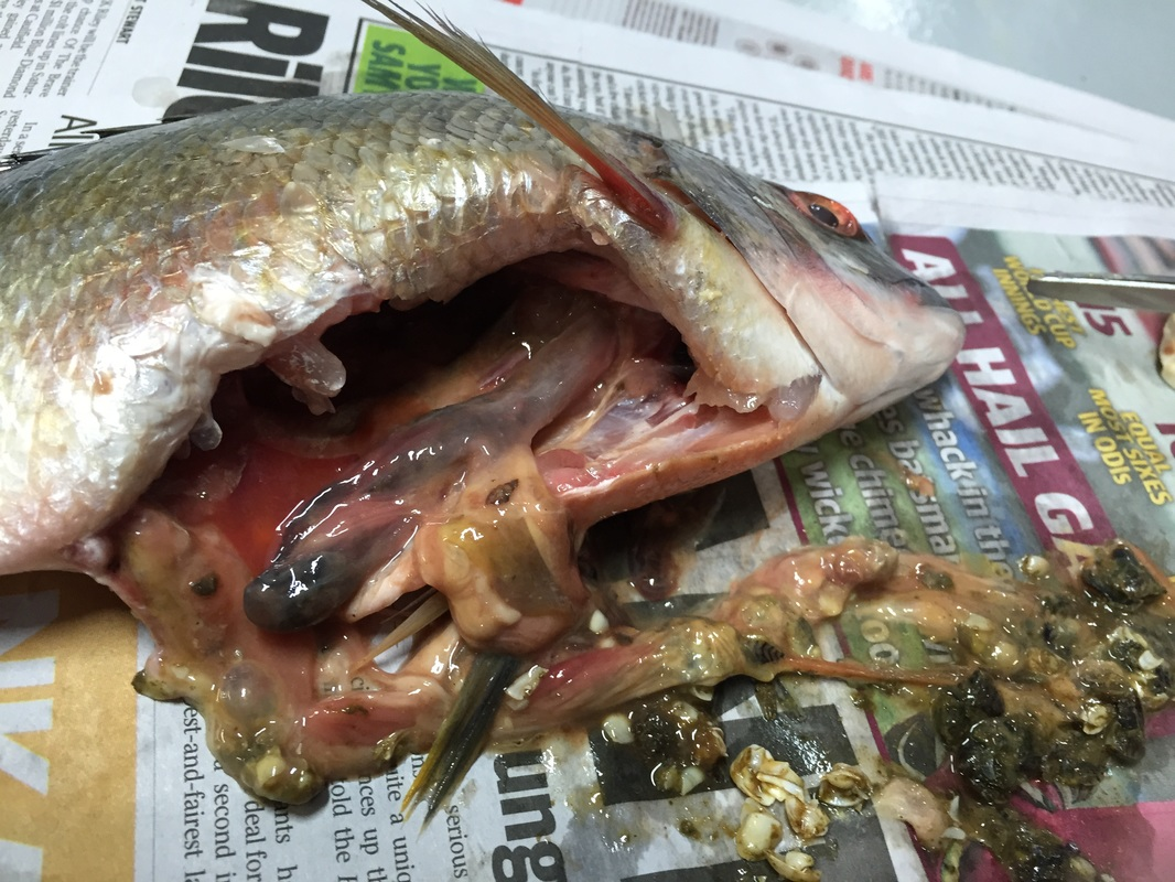 Fish Dissection Gallery