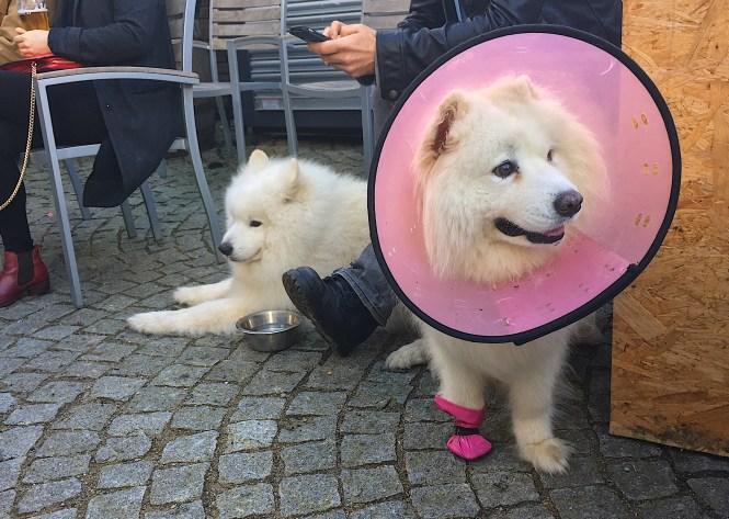 BAaD Dog Show