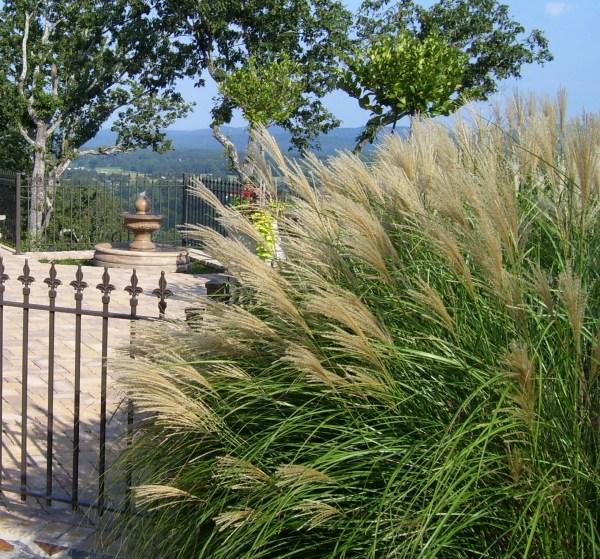 ornamental grasses archives - landscaping