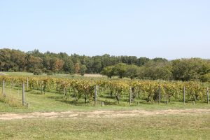 Wegmans Organic Farm | richard2496