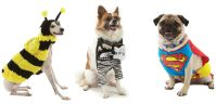 Dog Halloween Costumes - Cute Dogs in Halloween Costumes