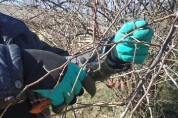 Winter work gloves for the summer resident