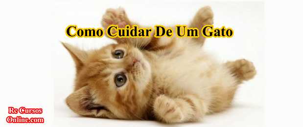 Como Cuidar De Um Gato (Livro Digital).