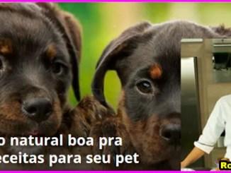 alimentacao natural para cachorro - Curso Alimentação Natural Para Cachorro