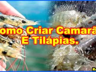 curso como criar camarao e tilapias - Como Criar Camarão E Tilápias Em Bioflocos Longe Do Mar.