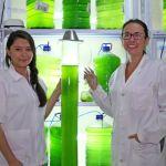 Crean biofiltros con microalgas 100 veces mejores que árboles para absorber CO2