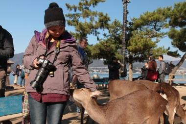 pet the deer
