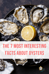 The 7 Most Interesting facts about oysters - RCI Plus Topsail