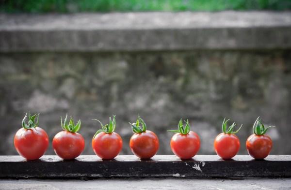 Andrews Produce Tomatos RCI Plus Topsail