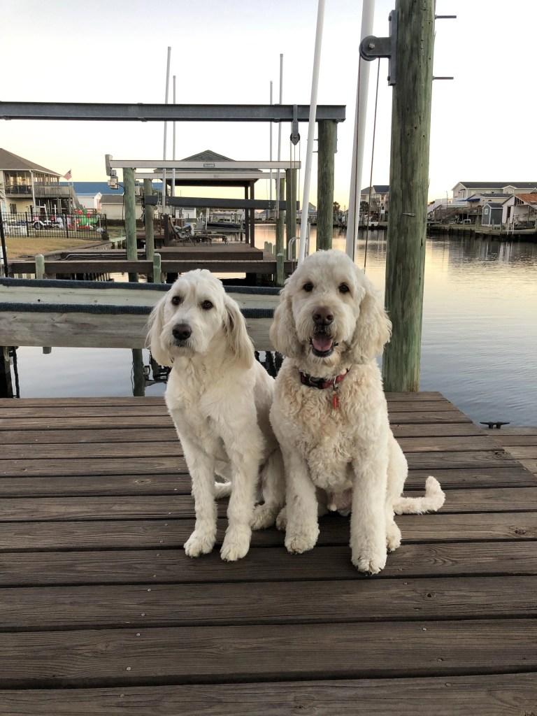 dogs on dock in surf city nc greta Siddiqui - RCI Plus Topsail