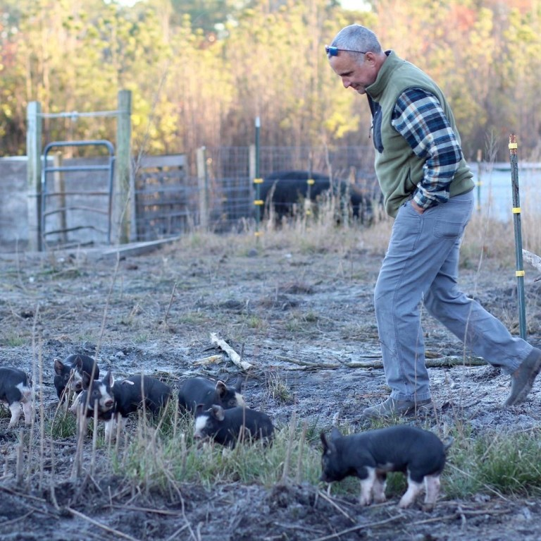 David Borkowski and piglets - Changin' Ways Farm - RCI Plus Topsail