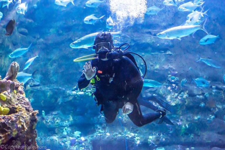 aquarium fort fisher rci plus topsail