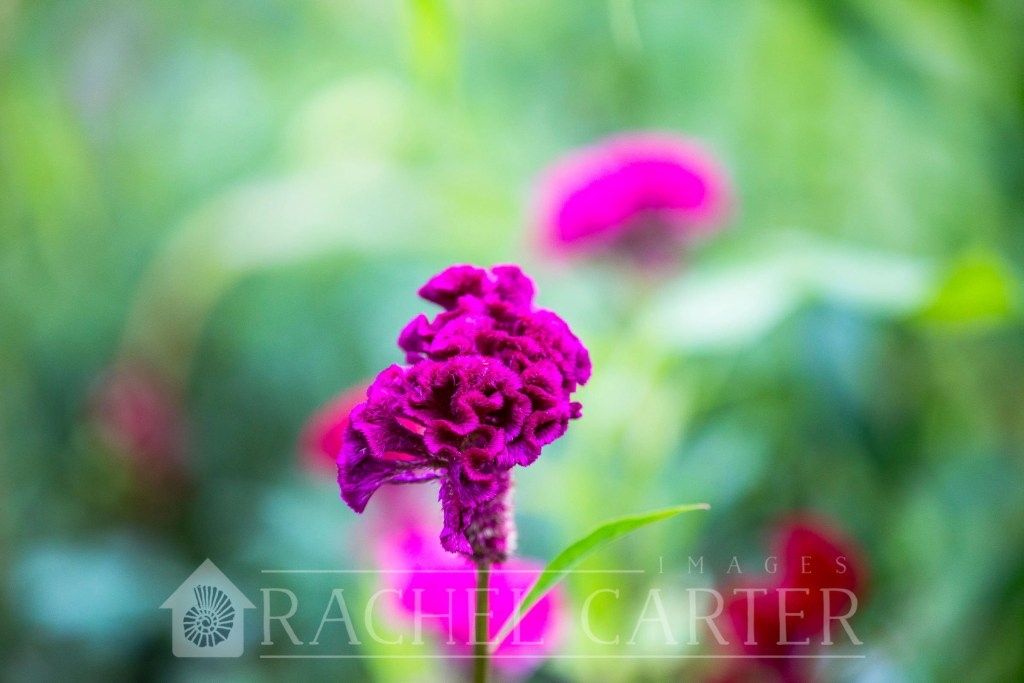 Planted Flower Farm, taken with Canon EF 70-200mm f/2.8L is III USM Lens for Canon  - Rachel Carter Images