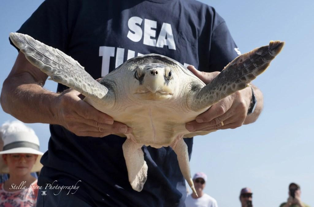 Turtle Release, August 2019, captured by Stella Spera