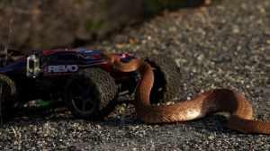iJRC016_E-Revo vs Rattlesnake 12