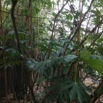 jungle-for-blog