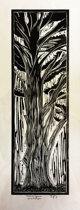 2cropped g joy....Monterey Cypress...11 x 30