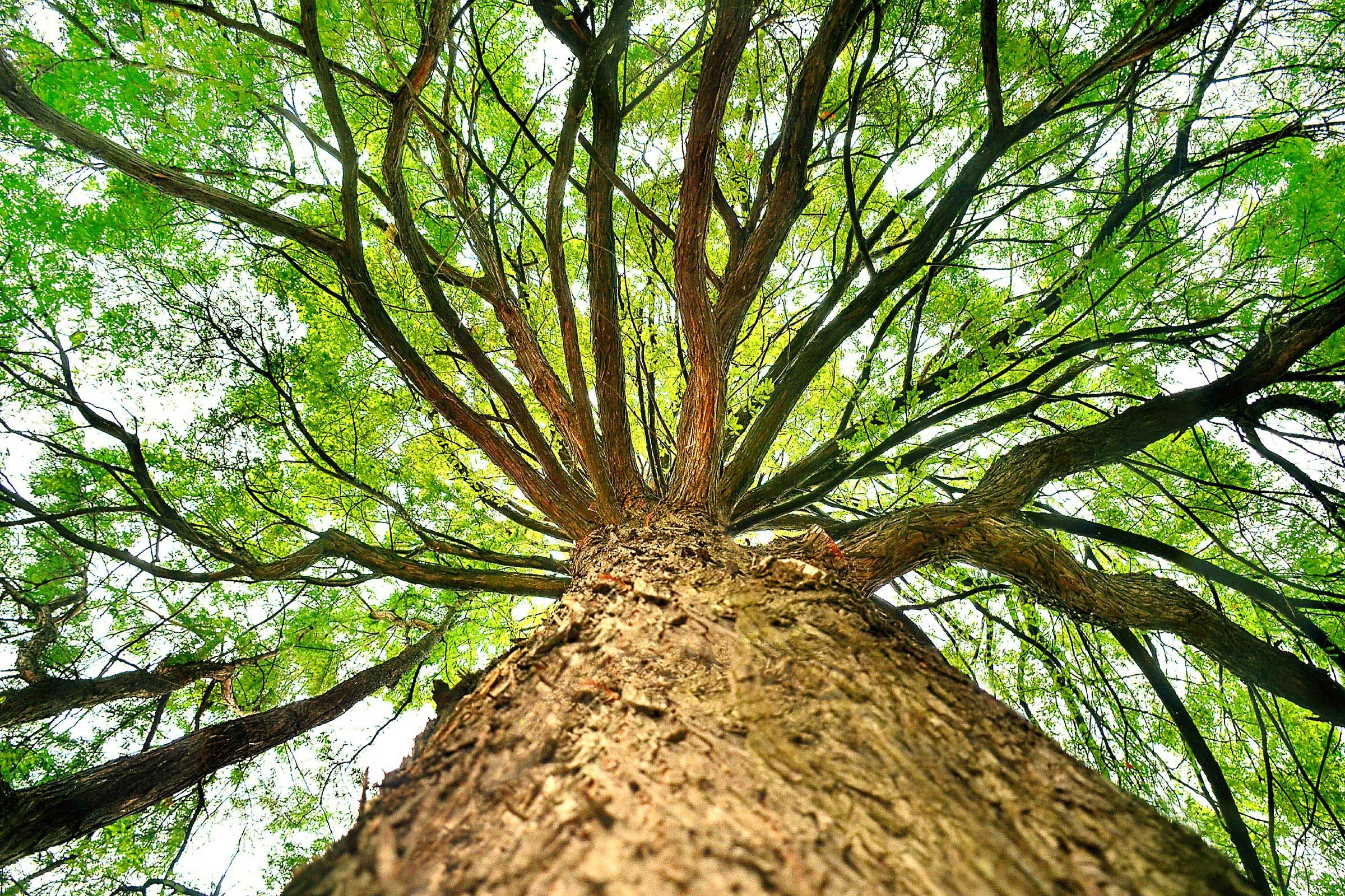 7 Weird Facts About Trees  Reader's Digest